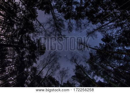 The Starry Sky Above The Pine Forest, Top View