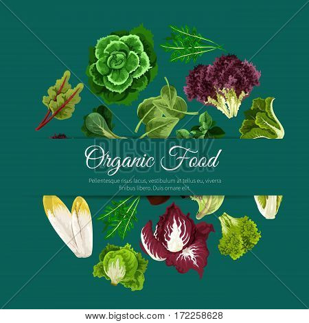 Lettuce salad vegetables of vector chicory and spinach, arugula, kale, lollo rossa and radicchio, romaine and pak choi or sorrel, swiss chard batavia. Vegetarian organic food poster