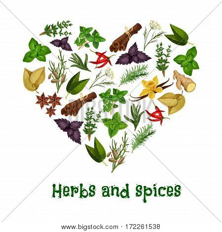 Heart poster of vector herbal seasonings and spice condiments anise and oregano, basil, dill and parsley, ginger, cumin and chili pepper, rosemary and thyme, sage, vanilla, mint, cinnamon and tarragon