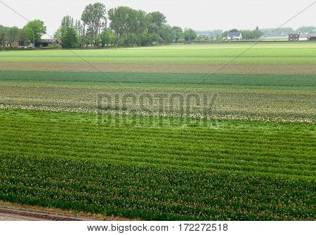Green color gradation of flower field in Lisse, Netherlands