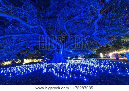 Vivid Sydney 2016 Light Festival Illumination Of Eucalyptus Tree