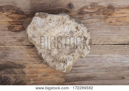 Nautilus fossil in stone on wooden background