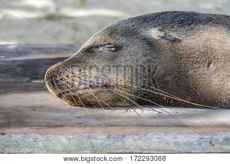 Seal Relaxes At The Beach