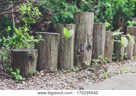 Beautiful landscape design, garden path closeup with wooden log fence from roundwood and evergreen bushes