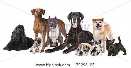 Group of Dogs, large dogs and small puppies