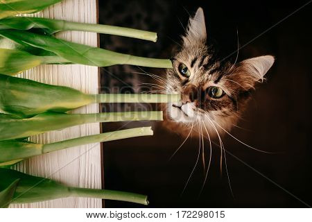 Cat Smelling Green Plant, With Big Whiskers. Beautiful Cat With Funny Emotions Biting  Stem On Black