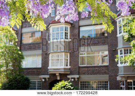 Jacaranda Flowers With Unfocused Building On The Background