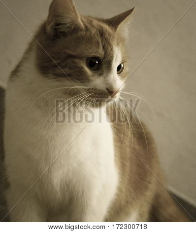beautiful cat with big eyes watching pet retro
