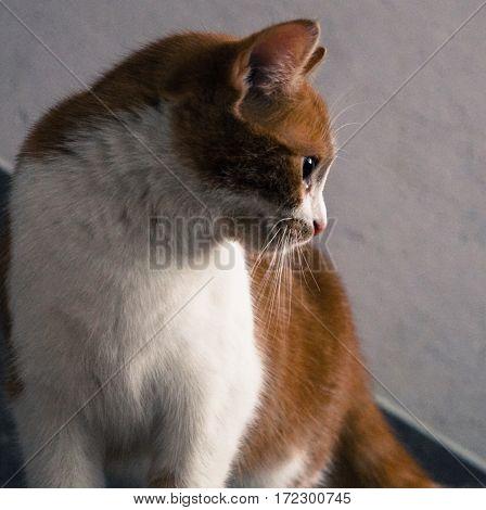 beautiful cat watching animal pet nature beauty