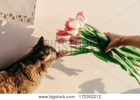 Stylish Hipster Girl And Her Cat Smelling Tulips In Morning In Room. Funny Moments At Home In Soft S
