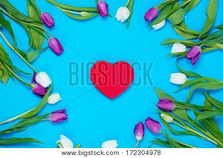 beautiful heart shaped toy and tender white and purple tulips lying on the wonderful blue background