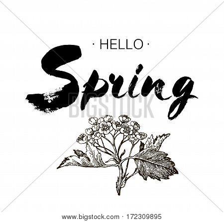 Phrase Hello spring Brush Pen lettering isolated on background. Handwritten vector Illustration. Handwritten modern brush lettering. Hand drawing elements design hawthorn