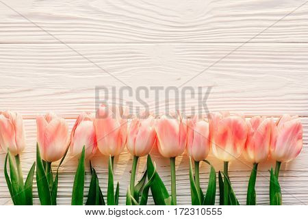 Spring Flat Lay. Pink Tulips On White Rustic Wooden Background Flat Lay. Top View Of Flowers In Soft