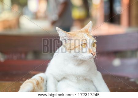 Closeup cute cat sit on table on blurred park view background