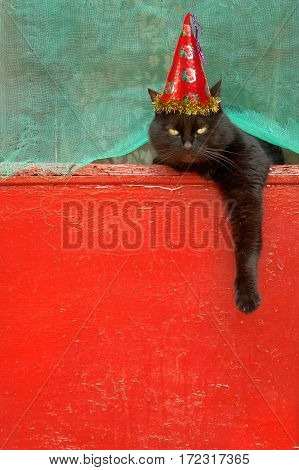 Black cat with on a red background