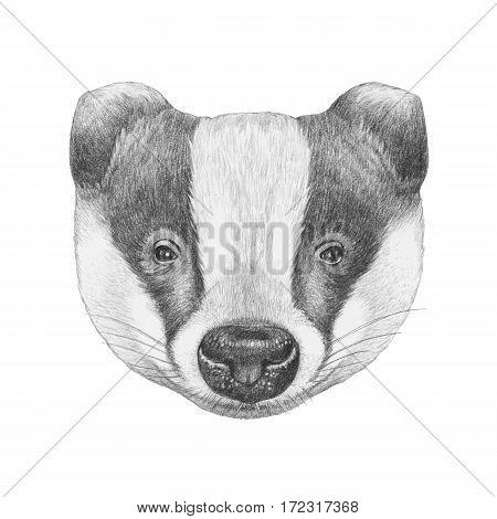 Portrait of Badger. Hand drawn illustration. Animal.