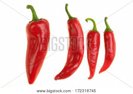 pepper red  isolated on a white background
