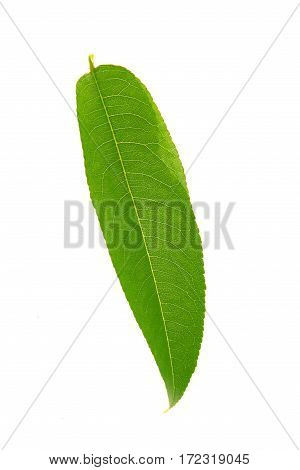 Peach leaf isolated on a white background