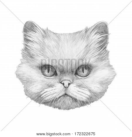 Portrait of Persian Cat. Hand drawn illustration.