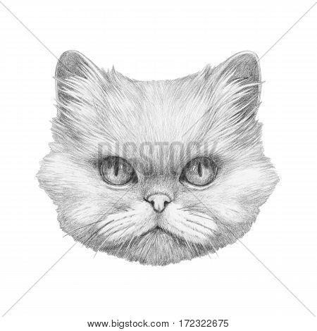 Portrait of Persian Cat. Hand drawn illustration.