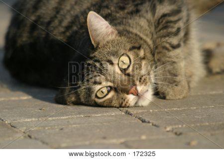 Resting Pet Cat
