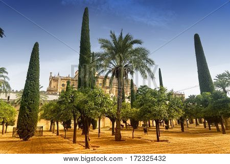 Cordoba (Andalucia Spain): courtyard of the medieval cathedral known as mezquita-catedral with various trees