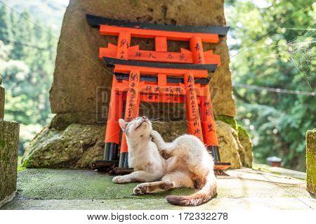 Torii Gates at Fushimi Inari Shrine and cat, Kyoto, Japan