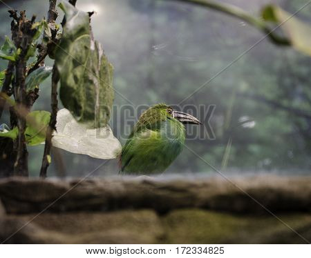 one exotic green bird sitting on a rock with a large beak