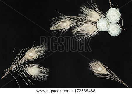 Black Retangular Horizontal Background With Handmade Gentle White Ranunculus Flowers and Peacock Feathers, Lying Flat, Top View. Have an Empty Place For Your Text.