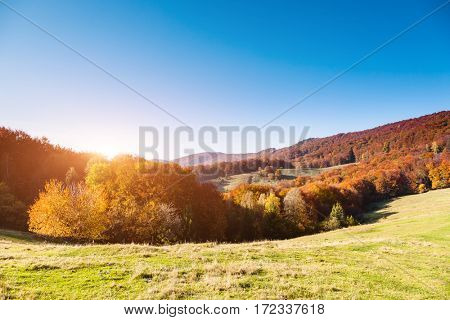 Great alpine valley that glows in the sunlight. Gorgeous morning scene. Red and yellow autumn leaves. Location place Carpathians, Ukraine, Europe. Discover the world of beauty. Artistic picture.