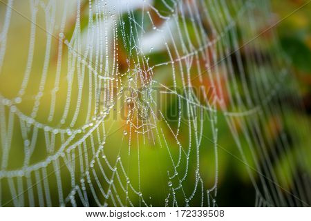 Cobweb in autumn. nature photo: spider web in the colored surroundings of Autumn (England).