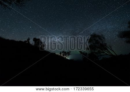 The milky way illuminated above the dark silhouette of the forest.