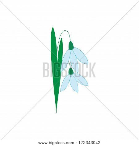 Snowdrop flower isolated. Illustration floret on white background. Cute delicate sign symbol spring. Colorful template for prints textiles wrapping wallpaper etc. Design element Vector illustration