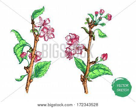 Vector Illustration of Apple tree sketch for Design, Website, Background, Banner. Hand drawn flower Elements. Vintage Spring Template
