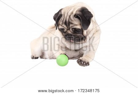 Happy cute pug dog puppy lying down playing with green ball isolated on white background