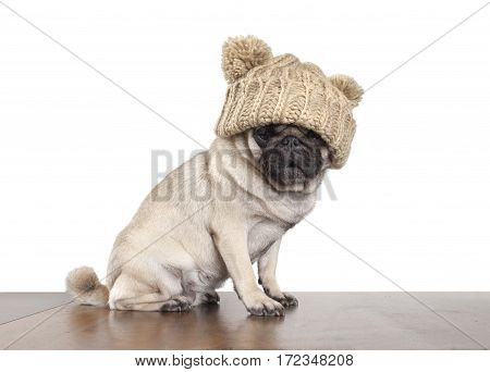 adorable cute pug dog puppy with knitted hat sitting on wooden floor and looking astonished