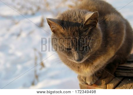 Portrait of the grey cat against white snow