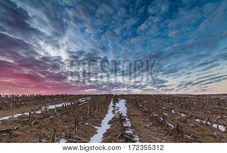 Vibrant Sunrise Clouds over Harvested Field in Winter