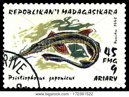STAVROPOL RUSSIA - February 17 2017: a stamp printed by Malagasy shows Japanese pianos (pristiophorus japonicus) Pelagic Fish circa 1993