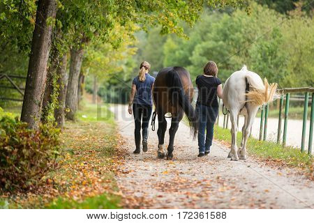 Friends taking a walk with their horses.