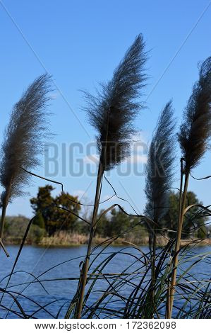 vertical shot of marsh grass blades and blue water