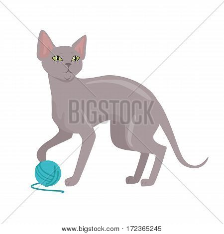 Peterbald cat breed. Cute bald cat playing with ball of yarn flat vector illustration isolated on white background. Purebred pet. Domestic friend and companion animal. For pet shop ad, hobby concept