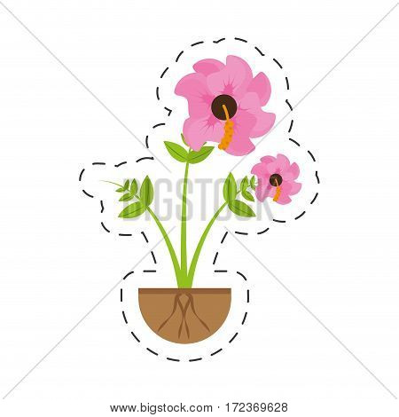hibiscus flower spring growing vector illustration eps 10