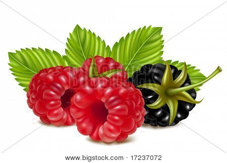 Vector illustration of ripe raspberries and blackberry (dewberry) with green leaves.