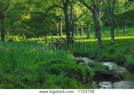 Wild Woodland