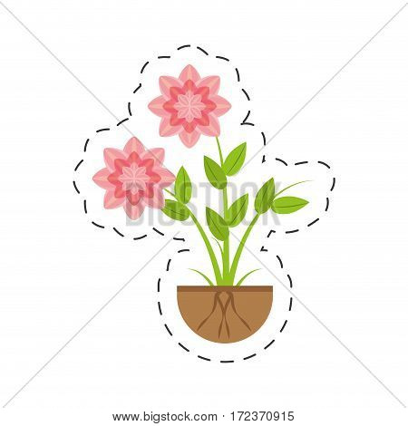 petunia flower nature growing vector illustration eps 10
