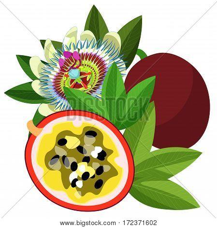 Passion Flower Blue Tropical Fruit Maracuya  Vector Illustration