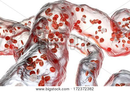 Network of blood vessels, capillaries with flowing blood cells isolated on white background, 3D illustration