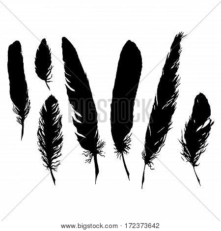Silhouette black and white monochrome feather set isolated vector