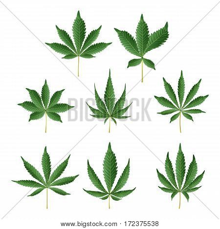 Marijuana Green Leaf Vector. Medicinal Herbs Collection. Cannabis Sativa or Cannabis Indica Illustration Isolated On White Background. Graphic Design Element For Printables, Web, Prints